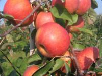 Tutti frutti – von Früchtchen und Früchten